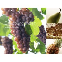 6711 - Leinwand Grauburgunder