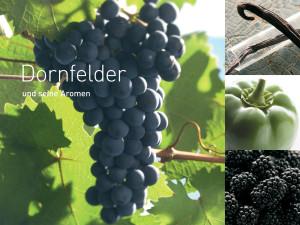 6791 - Leinwand Dornfelder